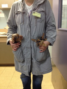 Puppies in my Pocket: Ginger and Snaps